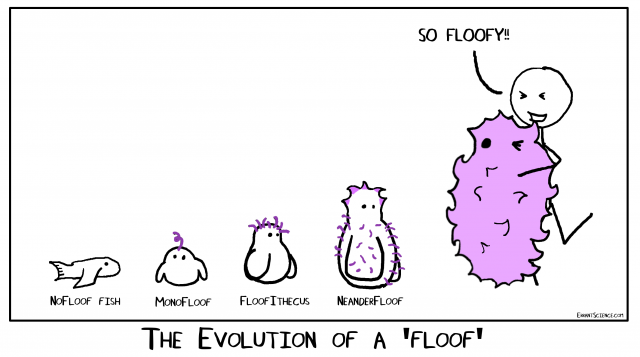 Evolution and the floofs